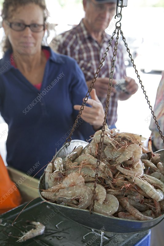 Selling shrimp, Louisiana, USA