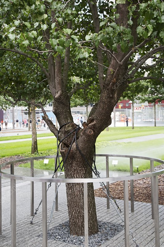 Survivor Tree, 11 September 2001 memorial