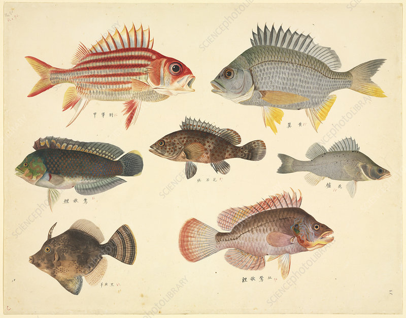 Plate 110: John Reeves Collection