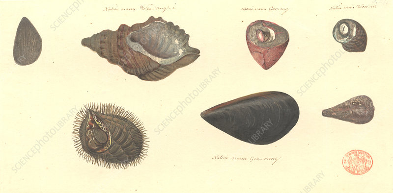 Molluscs, illustration