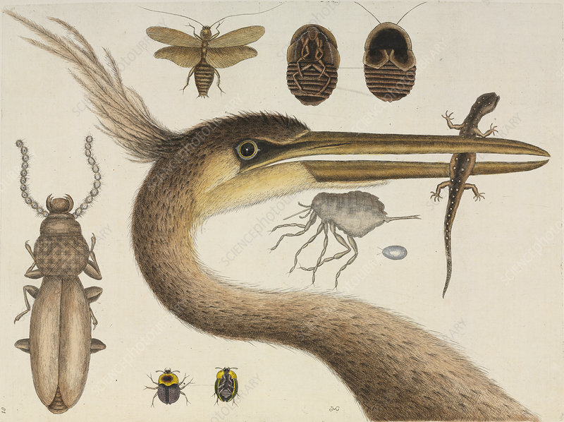 North Carolina Museum Of Natural Science Food