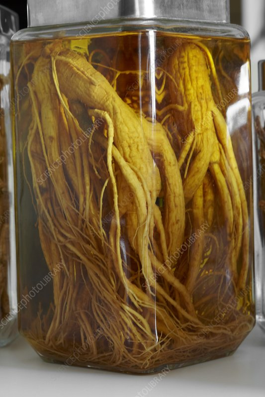 Ginseng roots in a jar