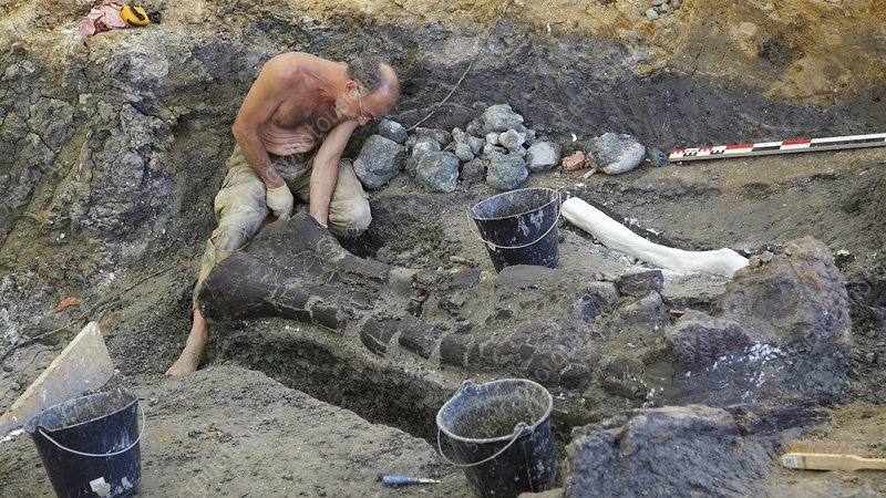 Palaeontology excavation, France