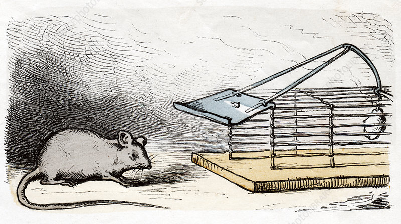 Mouse and mouse trap, illustration