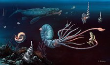 Cretaceous marine animals, artwork