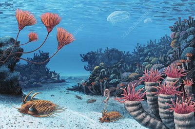 Trilobites of the early Devonian, artwork
