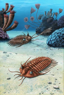 Two trilobites of the Devonian, artwork
