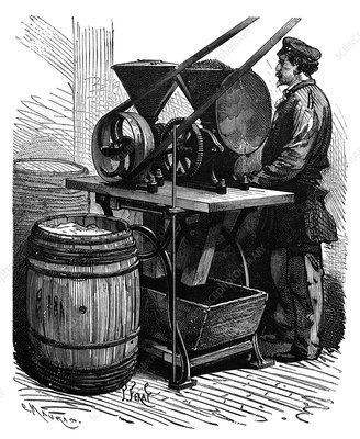 Milling insects for dyes, 19th century