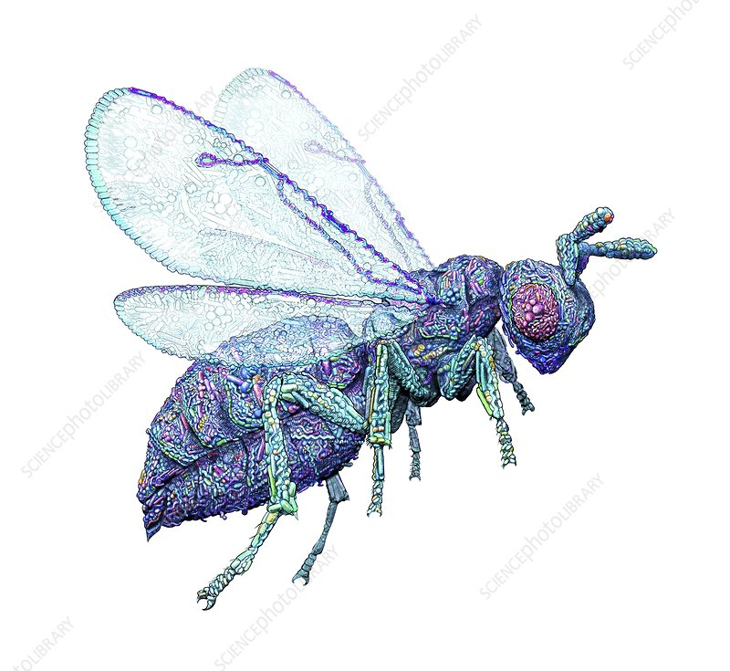 Microbial wasp, conceptual illustration