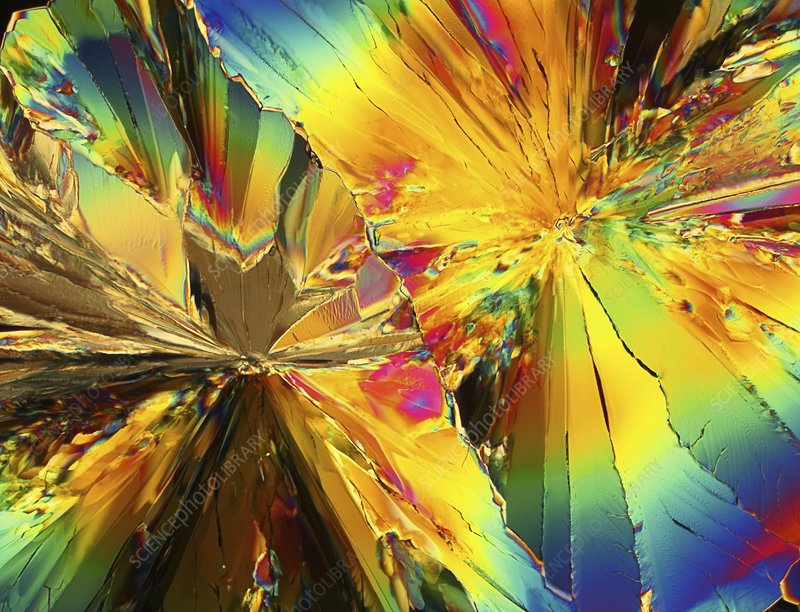 Light micrograph of citric acid crystals