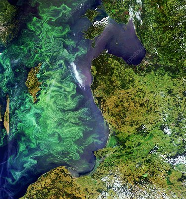 Algal blooms, Baltic Sea, satellite image