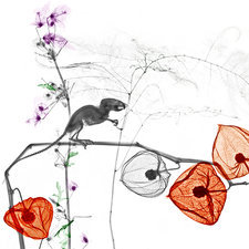 Mouse and Physalis plant, X-ray