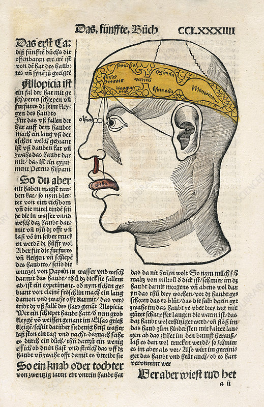 Brain functions and senses, 16th century
