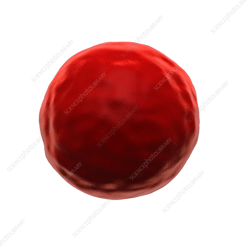Abnormal red blood cell, illustration