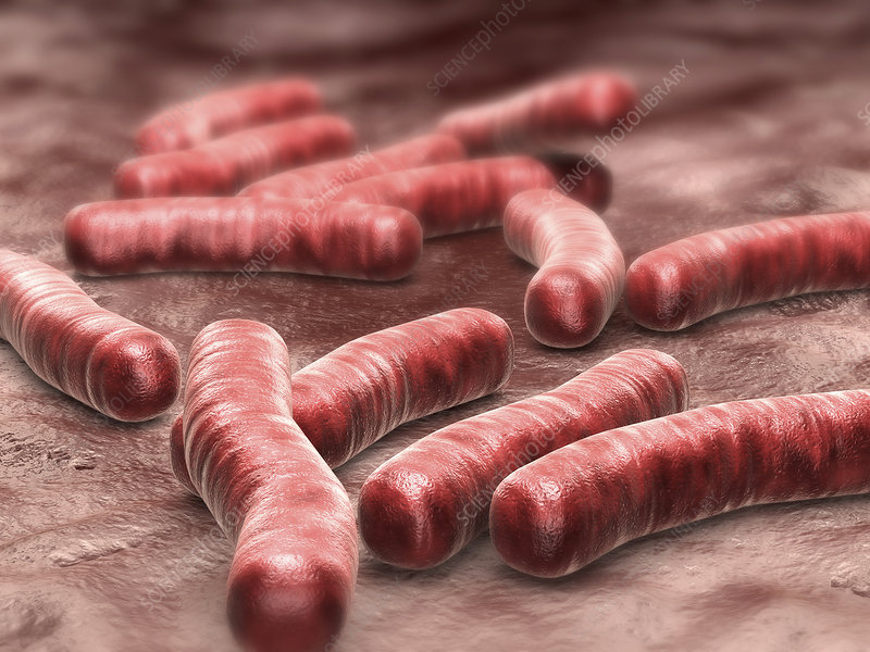 Tuberculosis bacteria, illustration