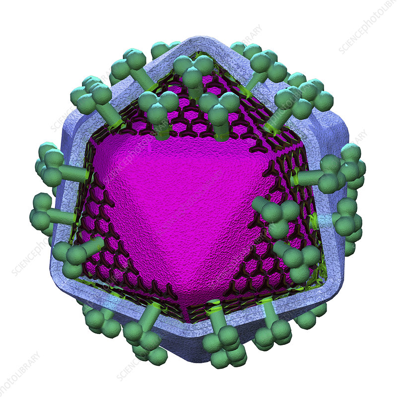 AIDS virus particle, illustration