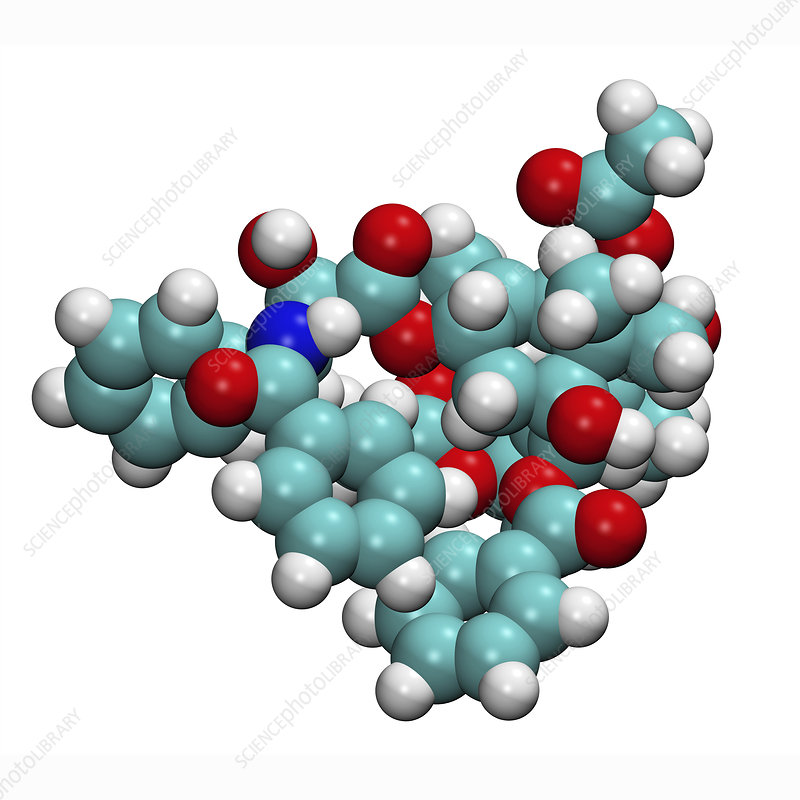 Model of taxol anticancer drug