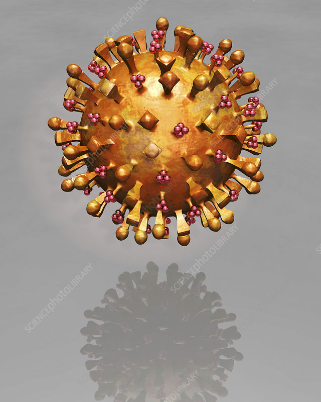 Bird flu virus, illustration