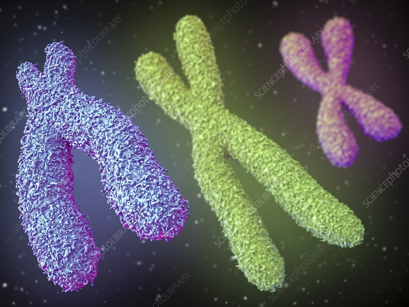 Chromosomes, illustration