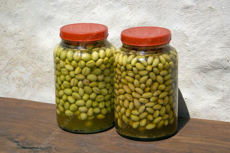 Home made olive curing