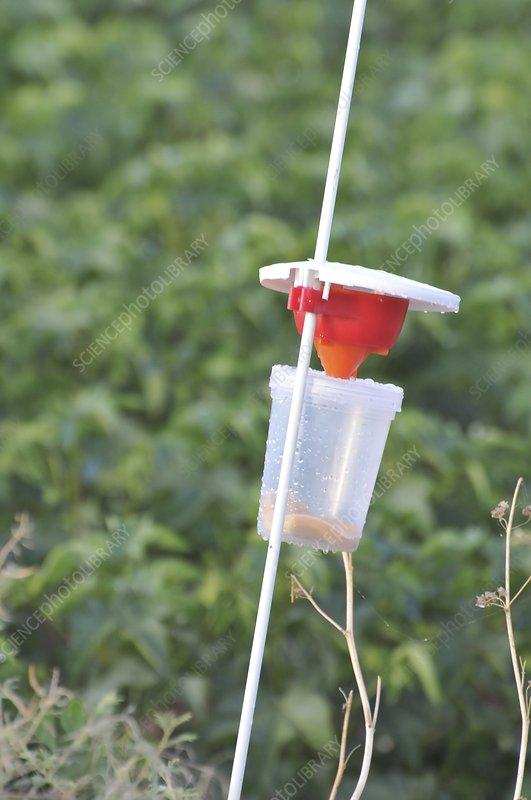 pest trap in an agricultural field.