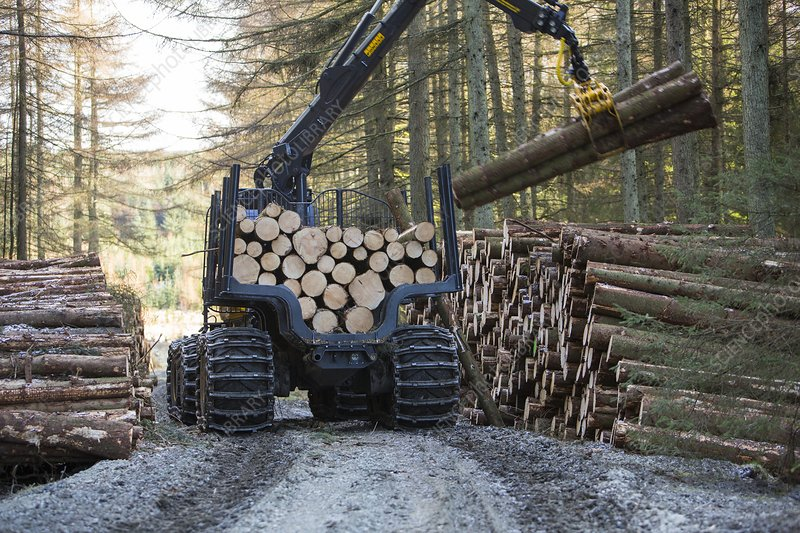 Freshly cut timber in Grizedale forest