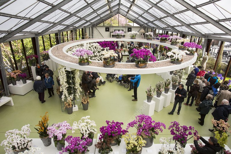 The orchid house at Keukenhof gardens