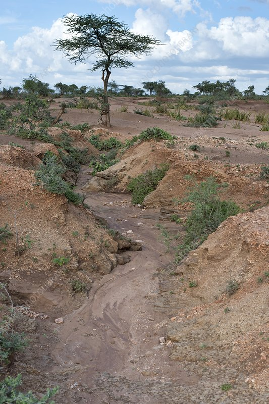 Soil erosion due to water runoff.