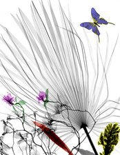 Plants and butterfly, X-ray