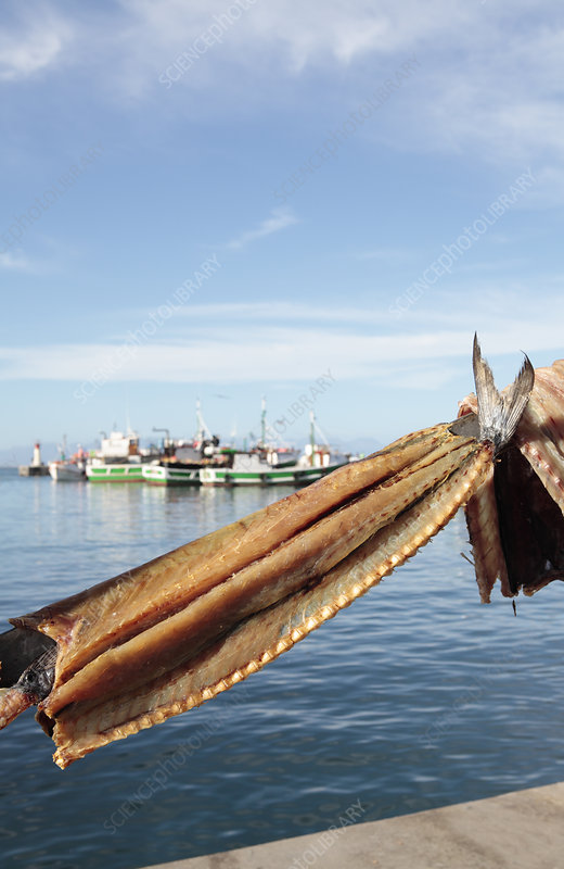 Snoek fillets being dried in the sun