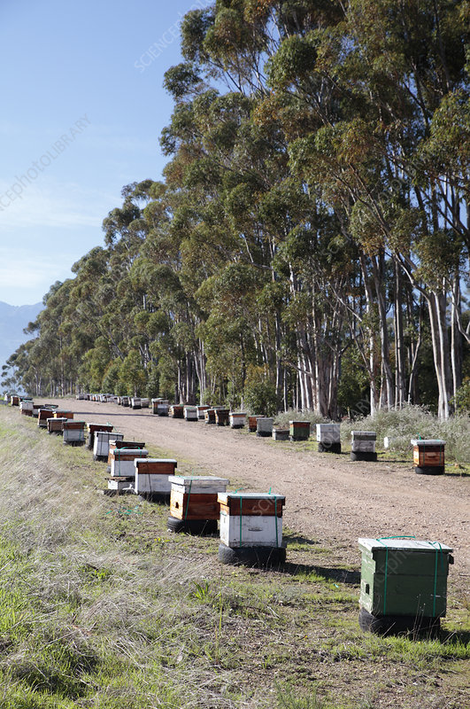 Bee hives, South Africa