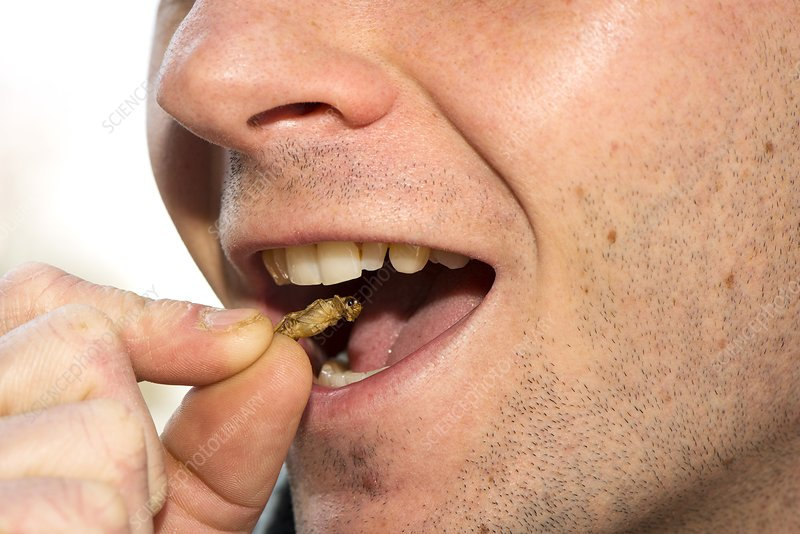 Insects for human consumption