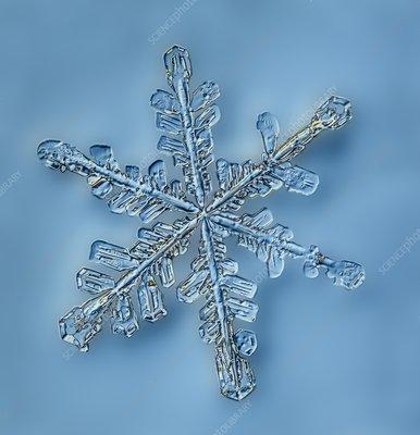 Snowflake crystal, LM