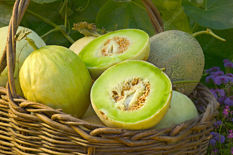 Melons in basket