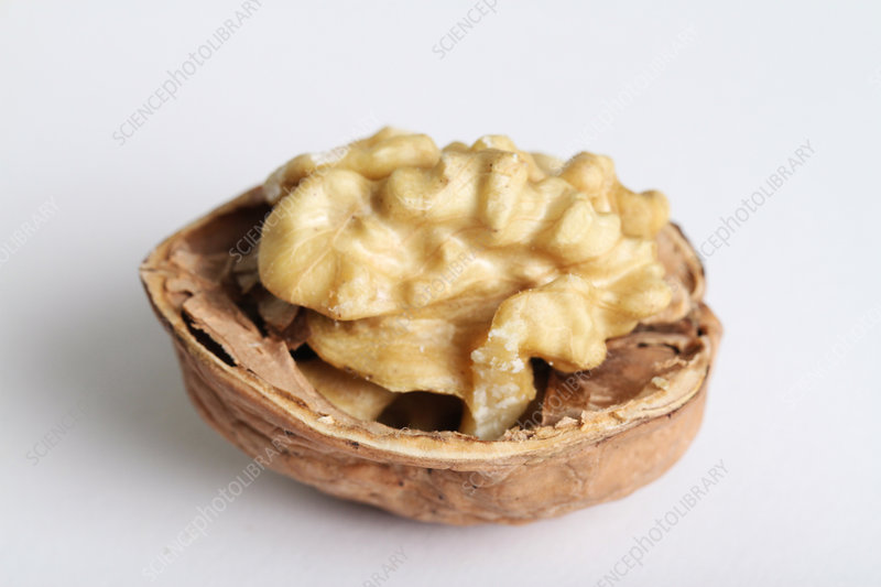 An Organic Walnut