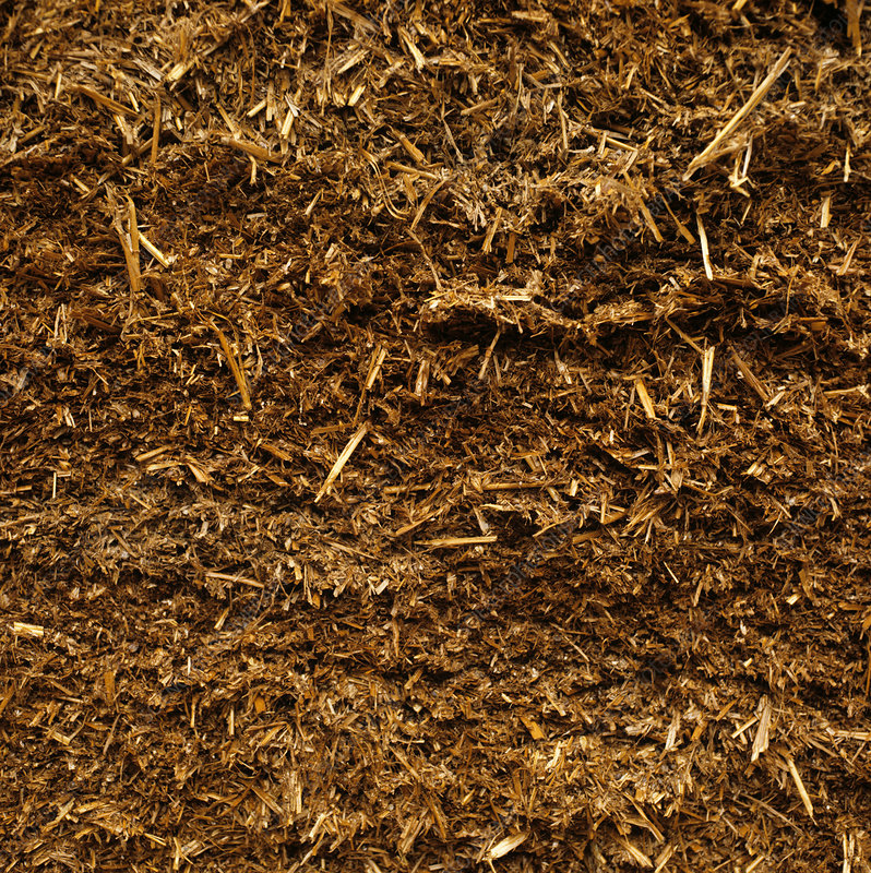 Whole Wheat Silage