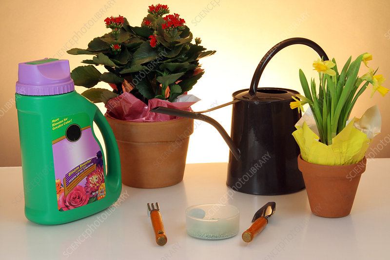 Household Plant Care