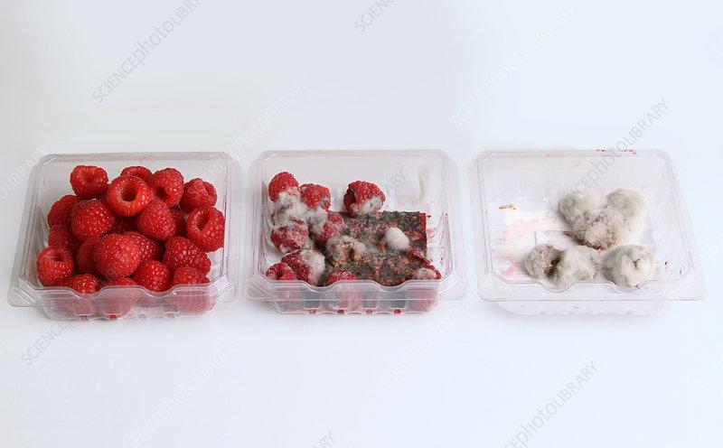 Raspberries Growing Mold