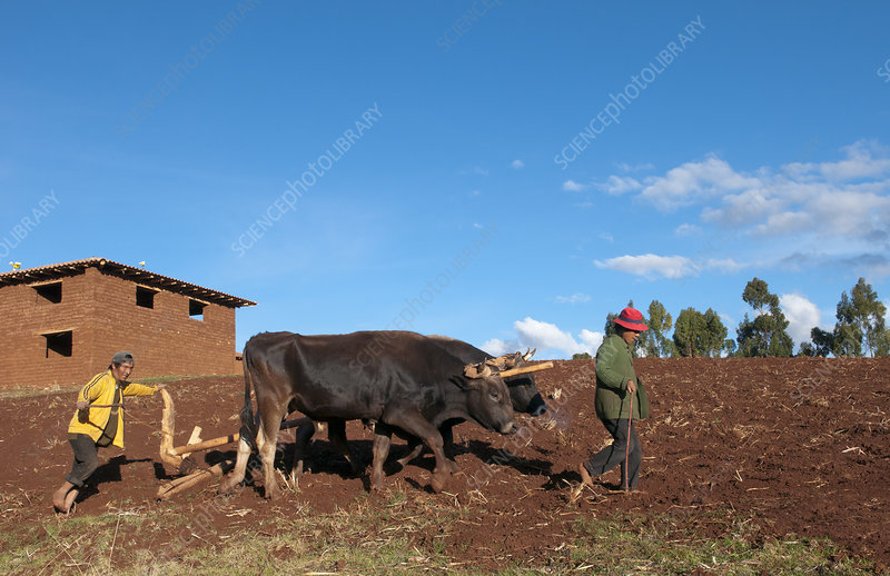 Small Farm Family Working in Fields