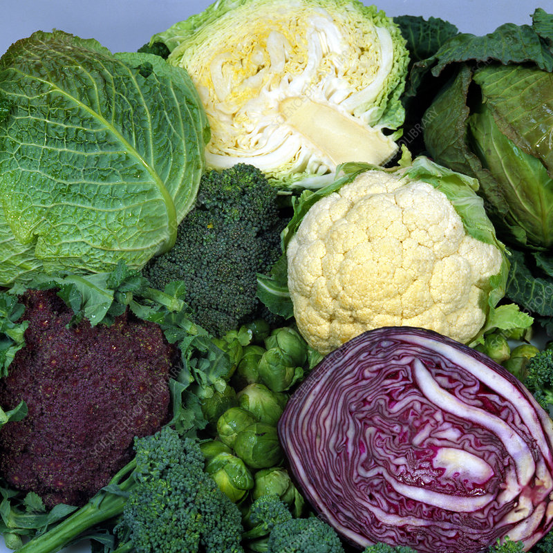A variety of brassica and cabbage crops