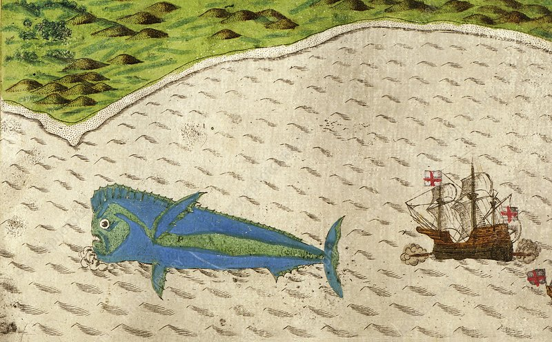 Dolphinfish from Drake's voyages, 1586