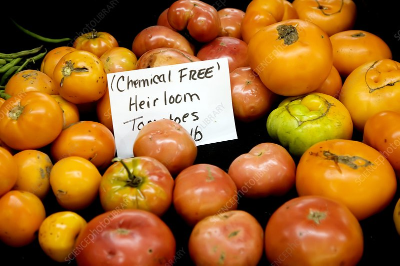 Chemical-free tomatoes