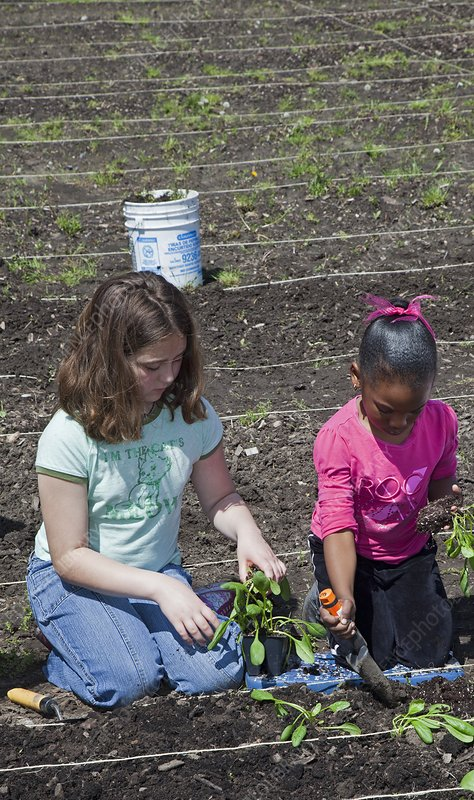 Children at work in a community garden