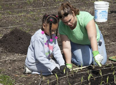 Child and adult planting onions
