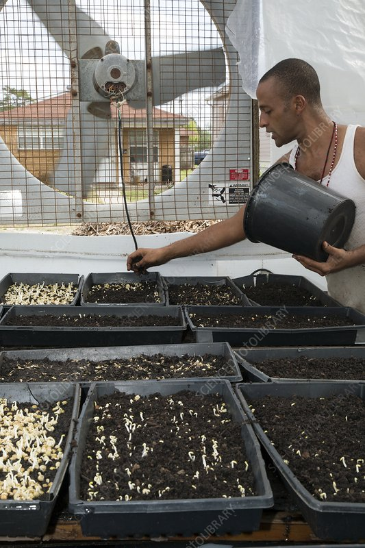 Volunteer at an urban farm, USA
