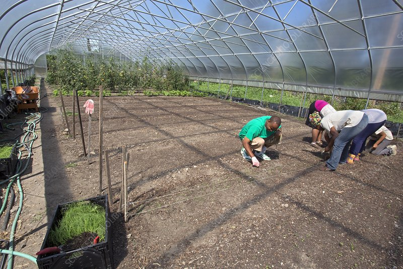 Agriculture students planting onions