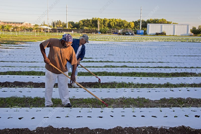 Workers on an organic farm, USA