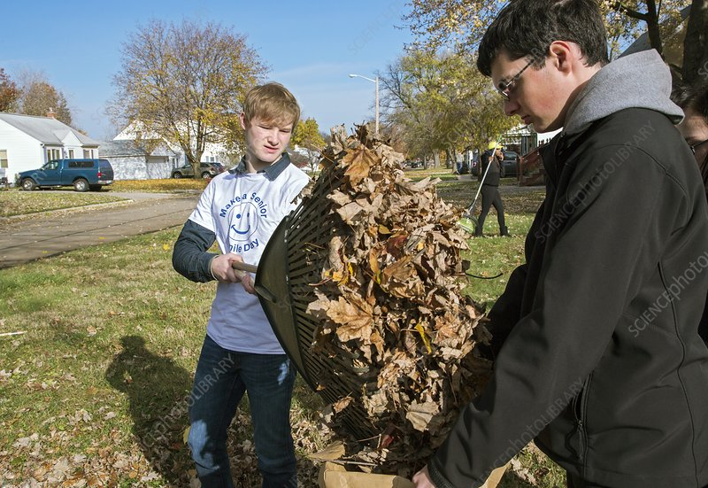 Young volunteers raking leaves