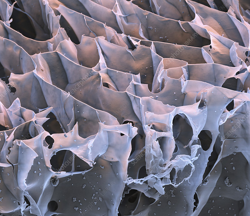 Spider silk from bacteria, SEM
