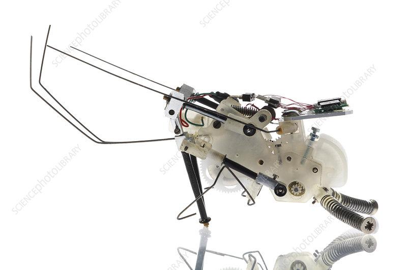 Cricket robot